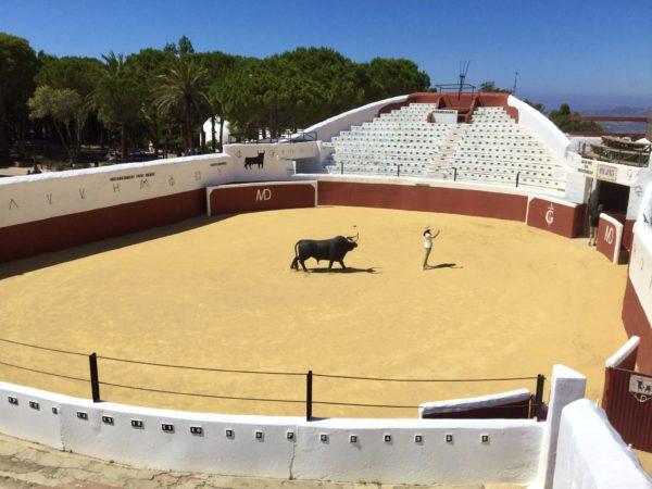 牛のはく製と闘牛場
