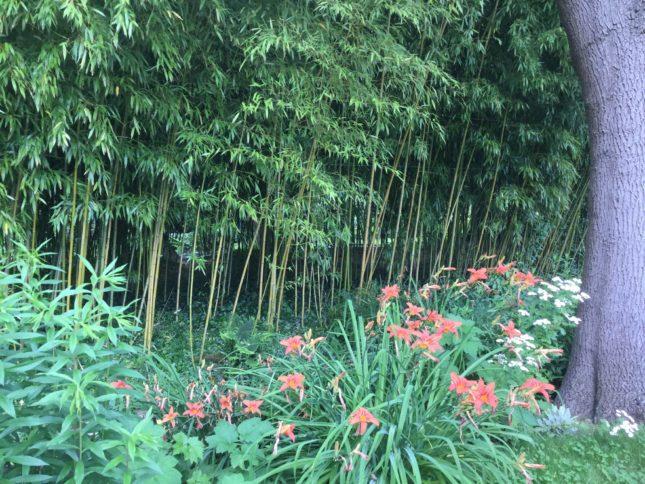 水の庭の竹林