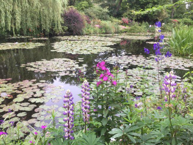 水の庭と花